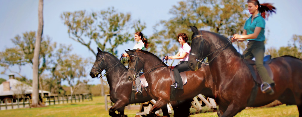 Georgia Equestrian Centers | Frederica Luxury Horse Stables