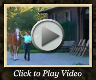 Equestrian Center video